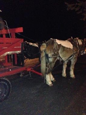 2 Horse open sleigh